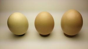 国産ダチョウ食卵SML