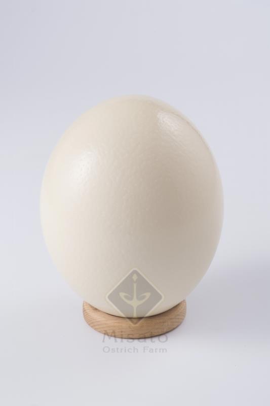 egg012